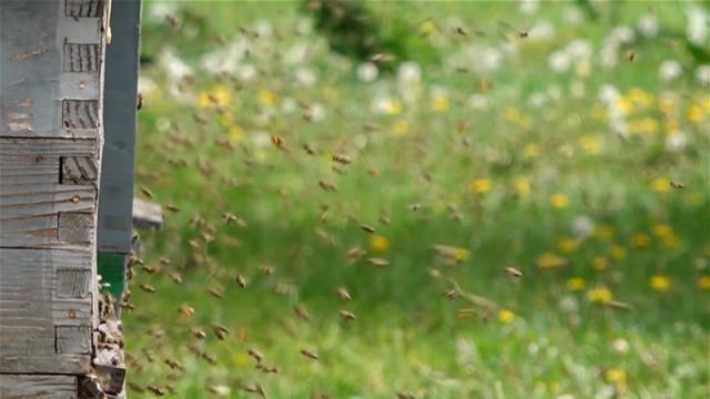 SPOS poziva pčelare da obidju pčelinjake