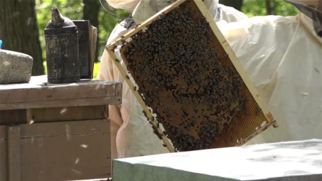 Pčelarenje teško primenjivo u brdsko-planinskim područijima