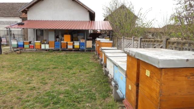 Stasava i četvrta generacija pčelara