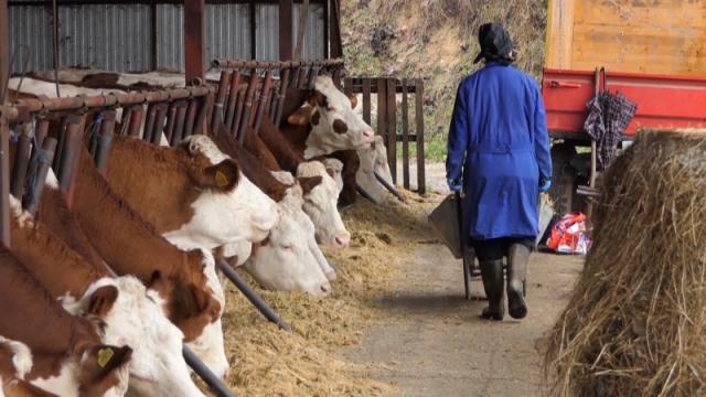 Higijena štiti zdravlje stoke
