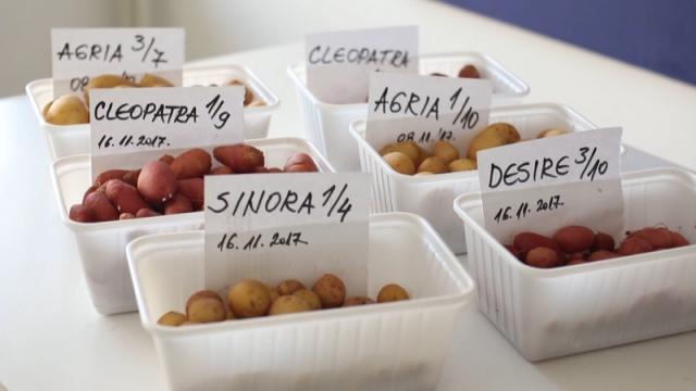 Molba proizvođača krompira da seju i subotom i nedeljom