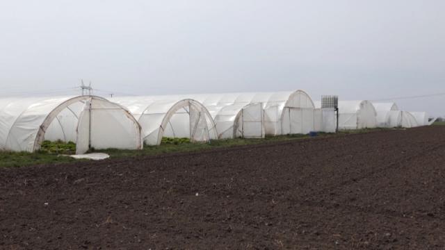 Poljoprivrednici očekuju pomoć iz Vladinog paketa mera