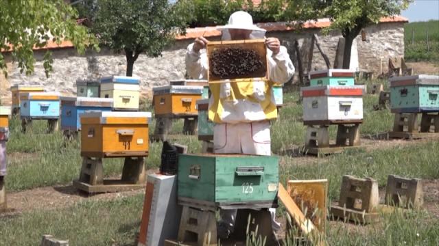Peticijom traže da dozvole za kretanje važe i za starije pčelare