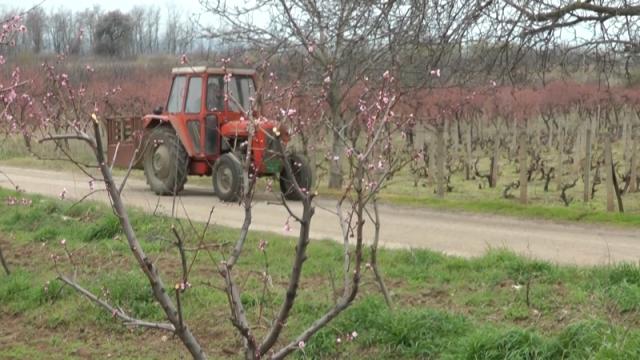 Poljoprivredni radovi na jugu u jeku