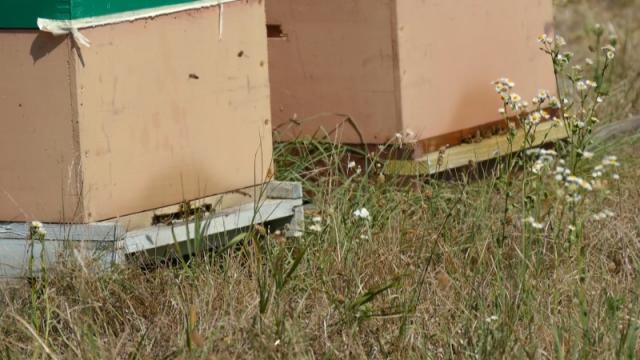 Korona otežala selidbu pčela na paše
