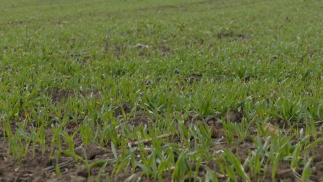 Za nastavak vegetacije neophodne nove padavine