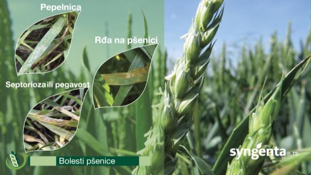 Elatus Era - nova era u zaštiti strnih žita