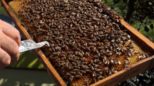 Nedovoljno vremena za pripremu pčela