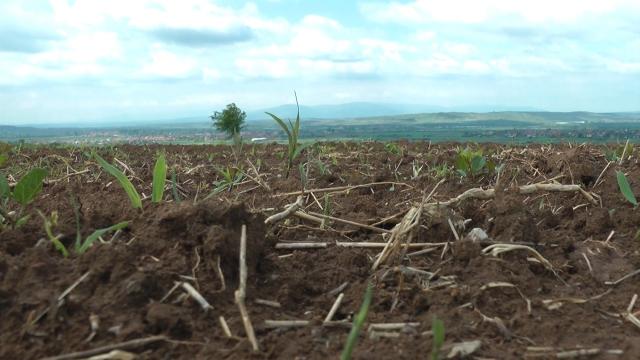 40.000 ha pod kukuruzom