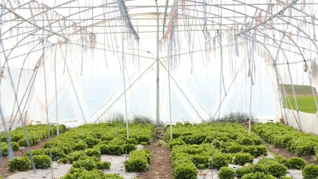 Poljoprivreda ide dalje