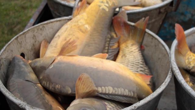 Raste interesovanje za osnivanje ribarskih gazdinstava