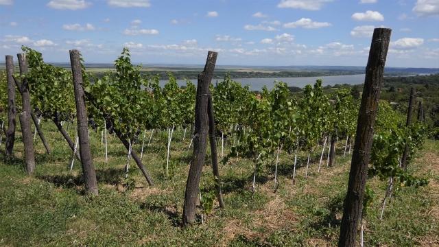 Besplatni saveti za poljoprivrednike u celom Beogradu