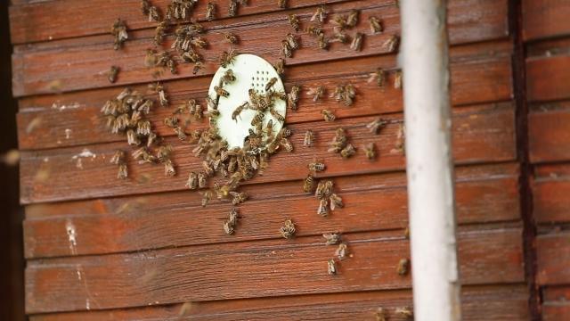 Ove godine više meda od bagrema