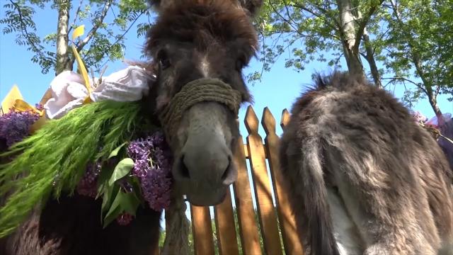 XII Dan magarica u Zasavici