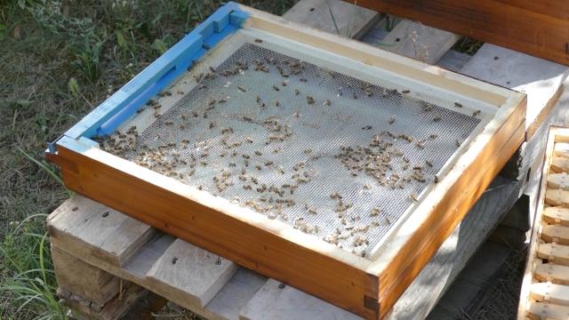 Blaga kaznena politika ne sprečava trovanje pčela