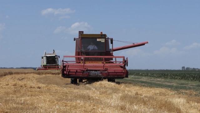Žito će čekati u silosima
