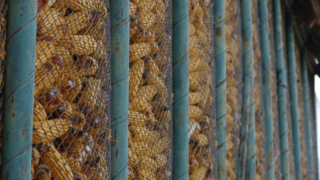 Кukuruz i pšenica doprineli dobroj spoljnotrgovinskoj razmeni