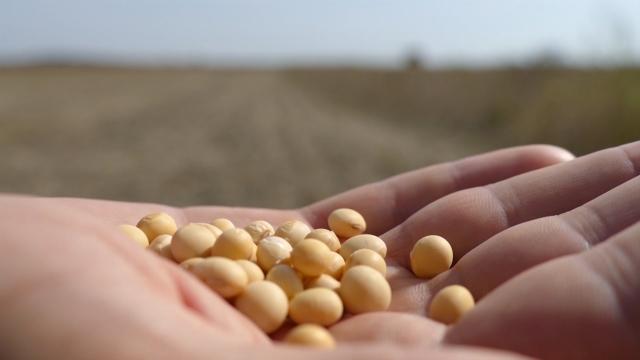 Pšenica najzastupljenija u berzanskom trgovanju