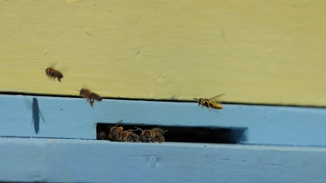Utočište za medonosne insekte