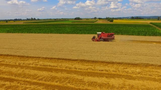Šumadinci zadovoljni svojom pšenicom