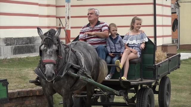 Nekada gotovo svaka kuća u Mačvi imala konja