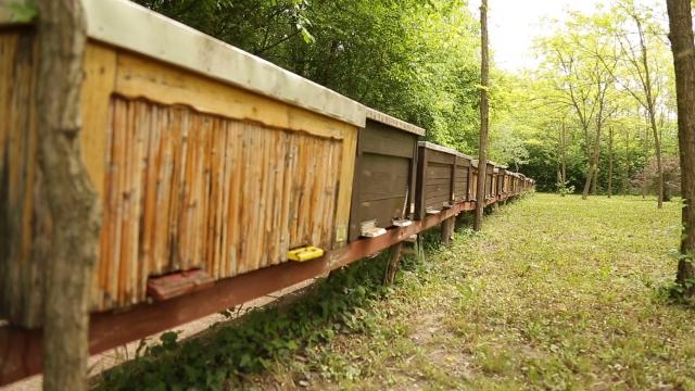Suncokret isplativ za pčelare