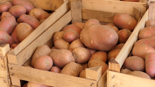 Manjak krompira na tržištu reguliše se uvozom