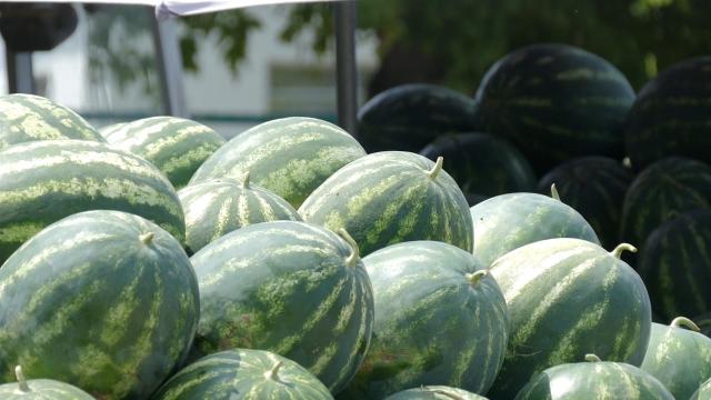 """""""Slatka"""" cena za proizvođače lubenica"""