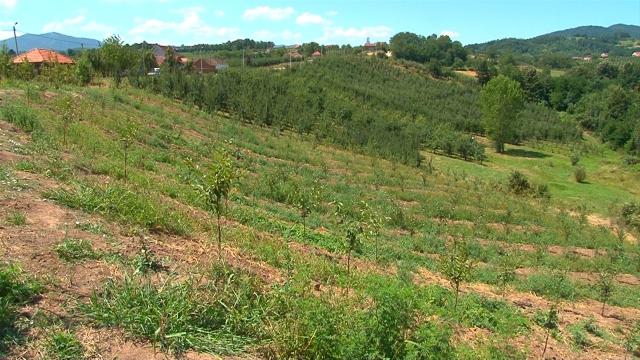 Grad Kraljevo daje u zakup 308 hektara poljoprivrednog zemljišta
