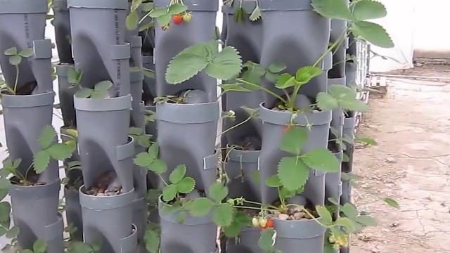 Akvapomija - sistem savremene poljoprivredne proizvodnje