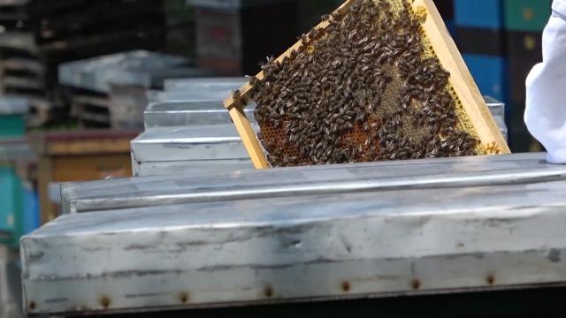 Pčele ovog leta radile samo da sebe prehrane