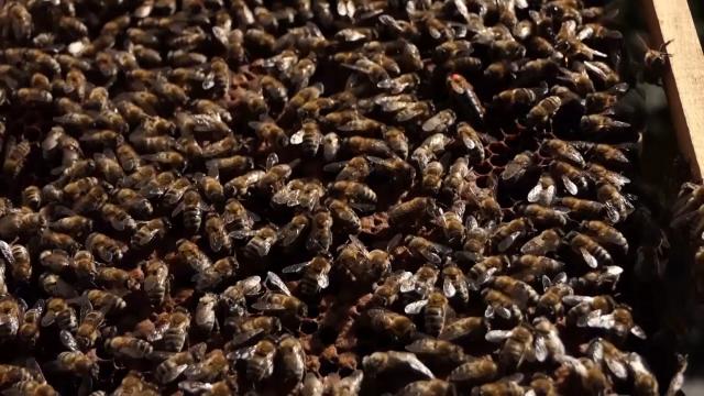 Pčelarstvo će moći da pokaže pun potencijal