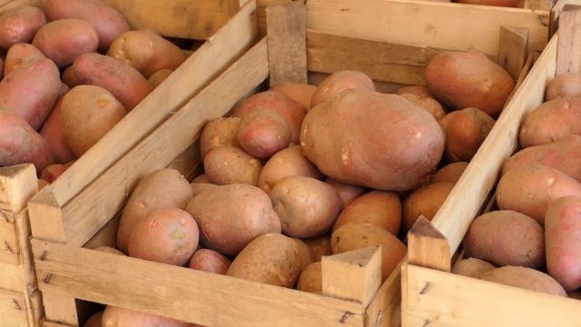 Sve veći odziv za brendiranje domaćih poljoprivrednih proizvoda u RS