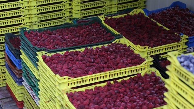 Standardi u proizvodnji smrznutog voća na visokom nivou