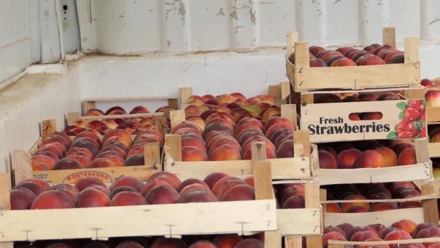 Najplatežnija tržišta prepoznala srpsku organsku hranu