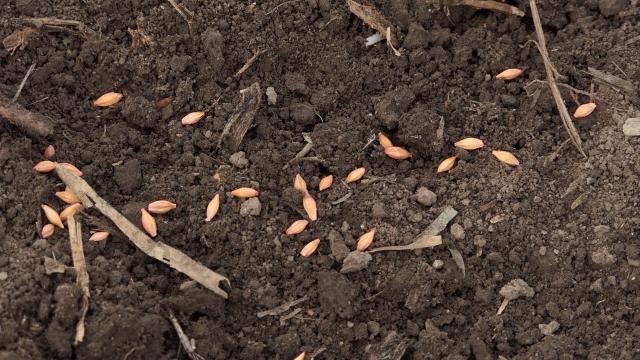 Upotreba deklarisanog semena investicija, a ne trošak