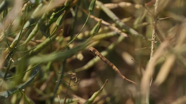 U izvozu dominira soja