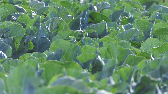 Zadruga - budućnost za povrtare iz Glogonja