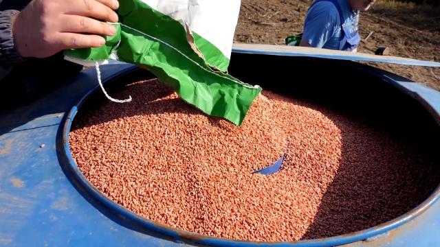 Poljoprivrednici u Turiji počeli setvu pšenice