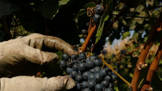 NALED-ova analiza sezonskog zapošljavanja u poljoprivredi