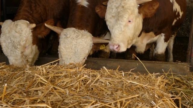 Država izdvojila dva miliona evra za podsticaj stočarima