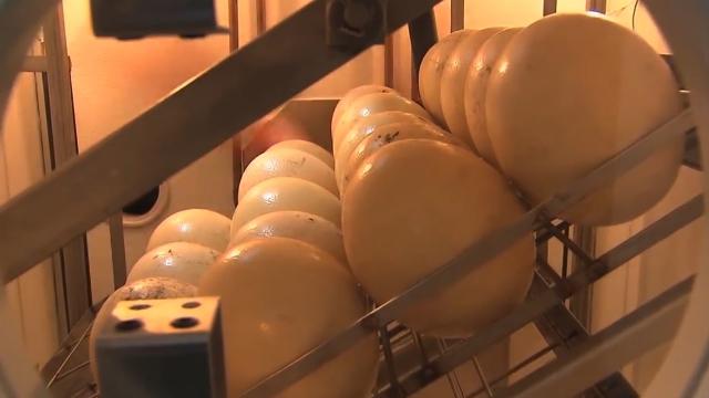 Nojevo jaje ne sadrži holesterol