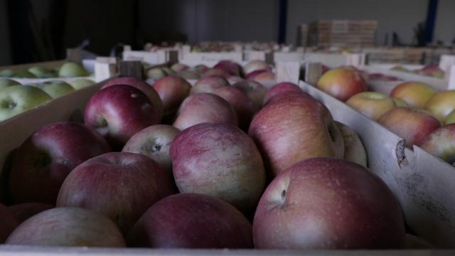 Poljoprivreda može da odigra važnu ulogu u izvozu Srbije u Indiju