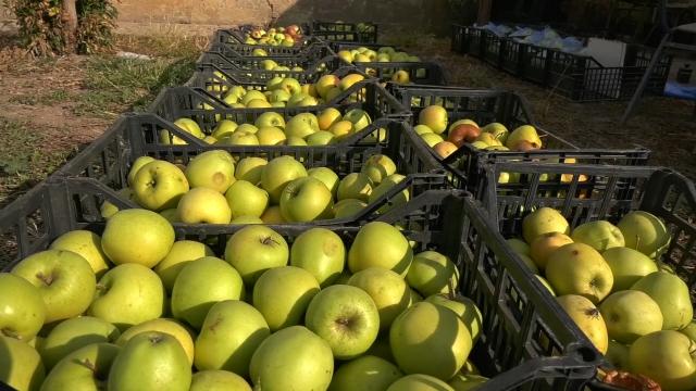 Jabuke iz Srbije značajan izvozni proizvod