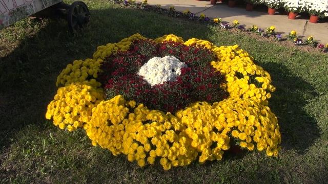 Jesen je vreme za raznobojno cveće