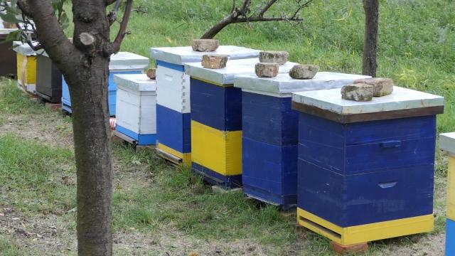 """Počinje prodaja meda iz """"Našeg meda"""""""