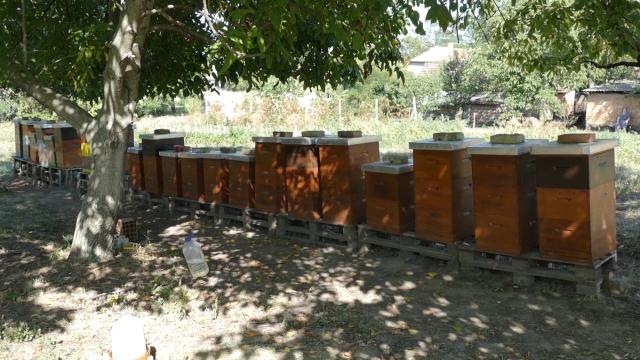 Nastavlja se pomor pčelinjih društava