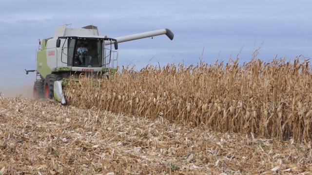 U godini krize, agrar povukao ukupan privredni rast