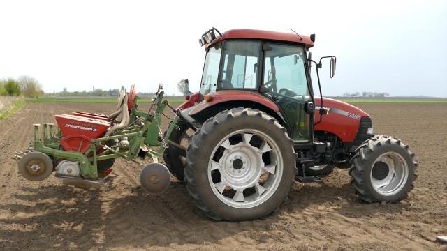 Posejano oko 5,5% više pšenice nego lane