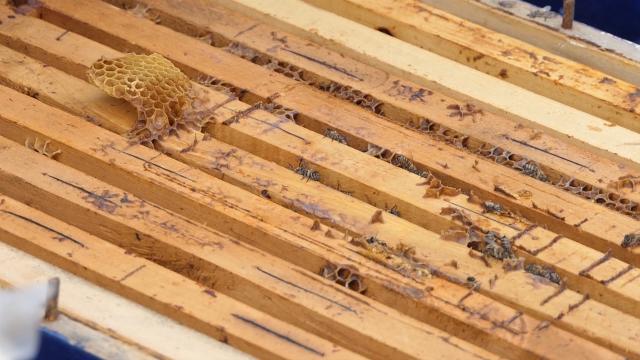 Zajednički rad na brendiranju i plasmanu meda